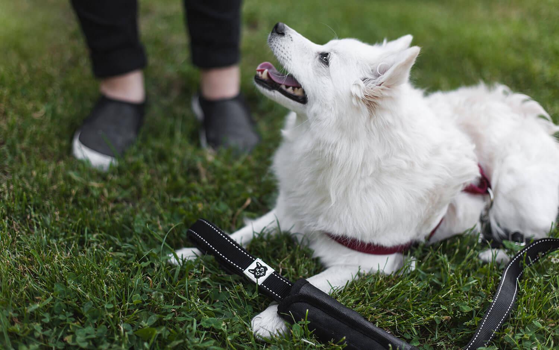 Die Stadthunde Produkttest Jolly Schwarz Photography Alexandra Stalzer Grafikdesign Wien Hunde Stadt Sponsored