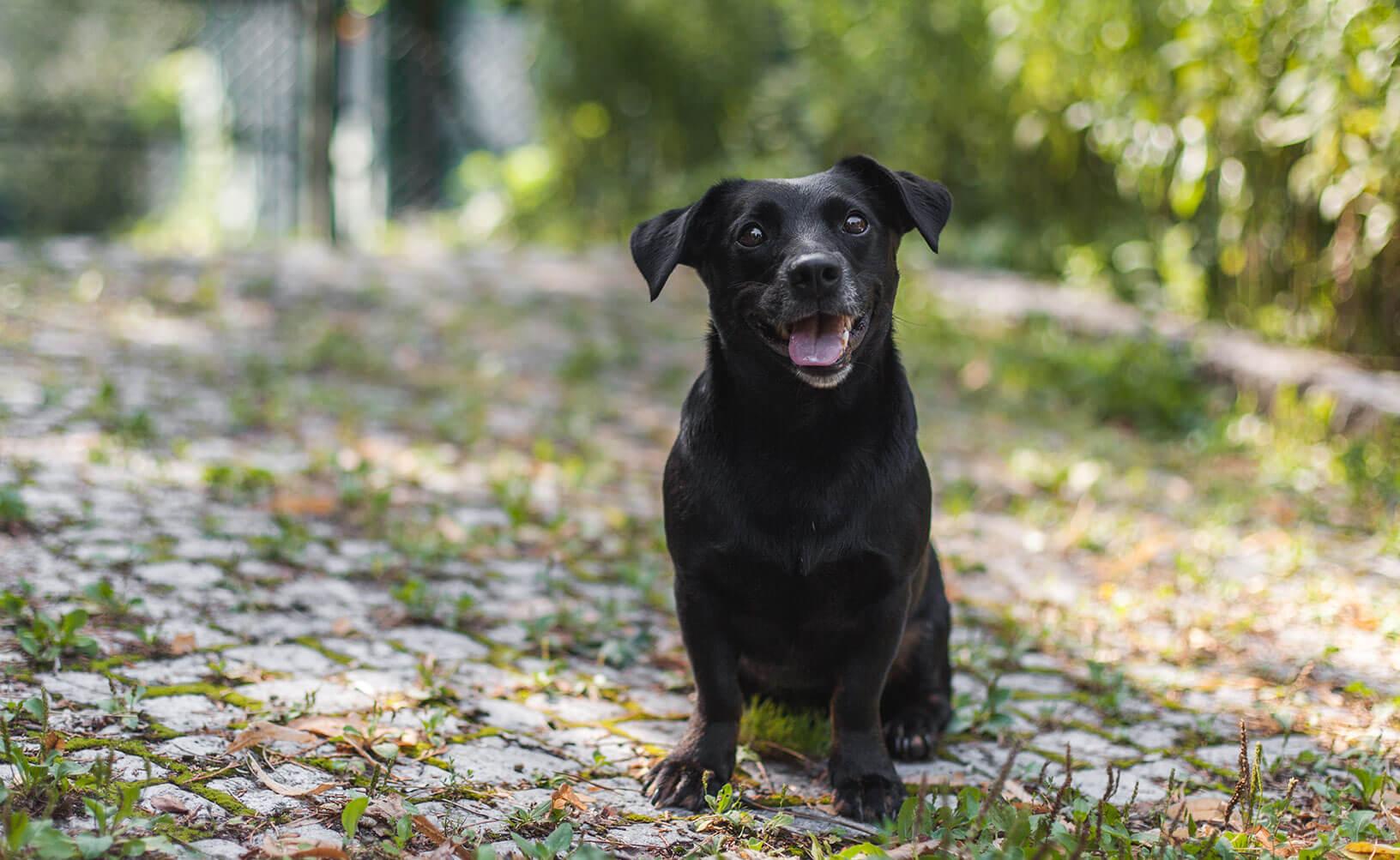 Die Stadthunde Madeleine Alizadeh Mala Portrait Adopt don't shop Tierschutz Jolly Schwarz Photography Alexandra Stalzer Grafikdesign Wien Hunde Stadt