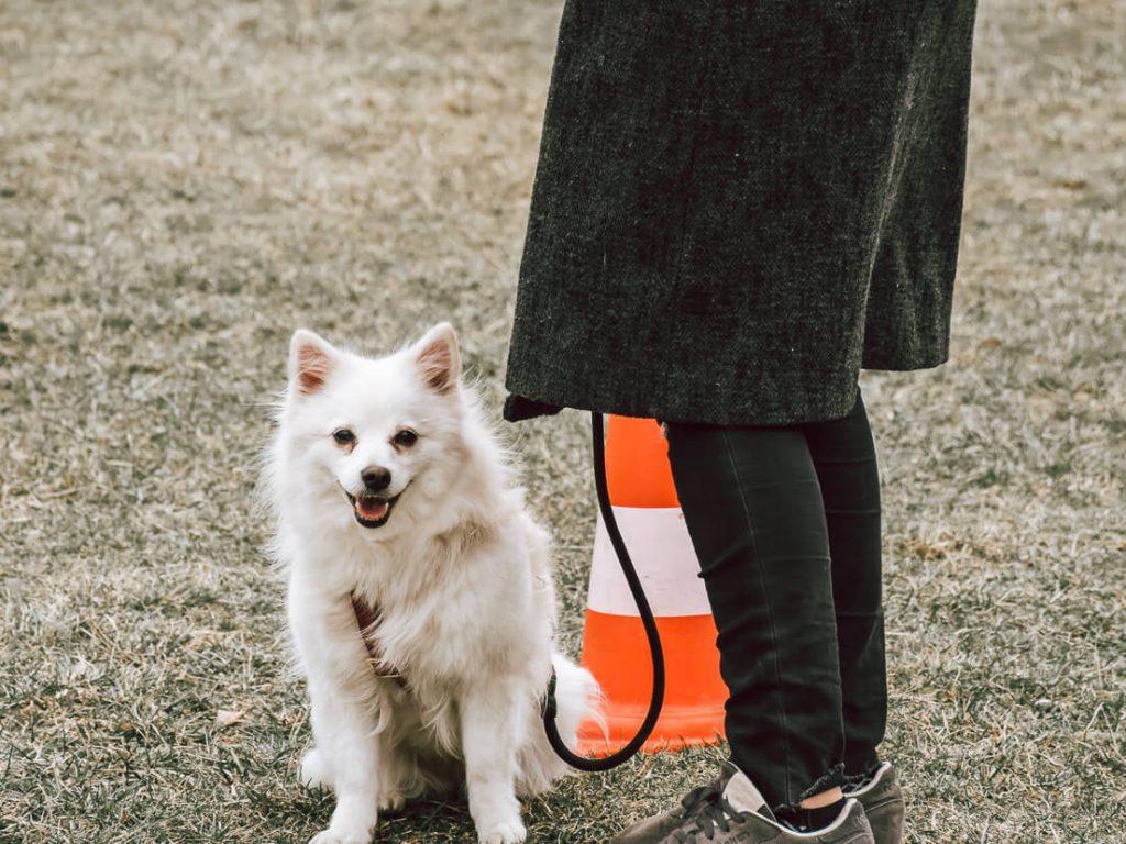 Die Stadthunde, Hundeschule, Hundetraining, Hundeschule hundefragen, wien